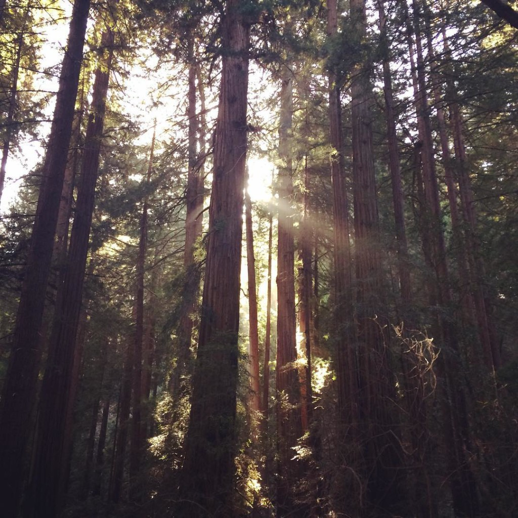 2015-october-redwoods
